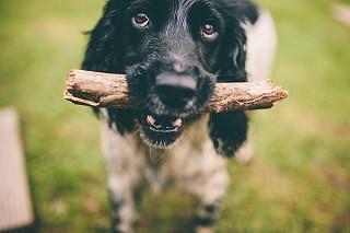 Ballyvolane House pet-friendly