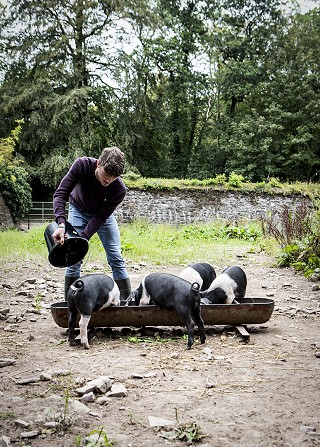 Feeding the piggies