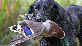 'Game-bird hunters at wild at heart' by Corinna Hardgrave writing for The Sunday Times